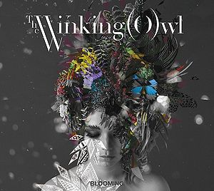 Blooming The Winking Owl Generasia